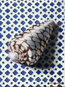 Shell (Coquillage) by Isy Ochoa