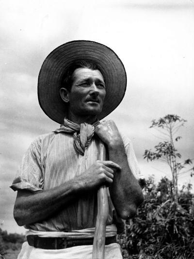 Italian Man Working in the Field, Cleaning the Coffee Trees-John Phillips-Photographic Print