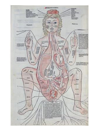 The Anatomy of the Pregnant Woman, Illustration from 'Fasciculus Medicinae' by Johannes De Ketham
