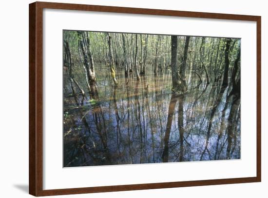 Italy, Latium, Circeo National Park, Selva Di Circe, Lake--Framed Giclee Print
