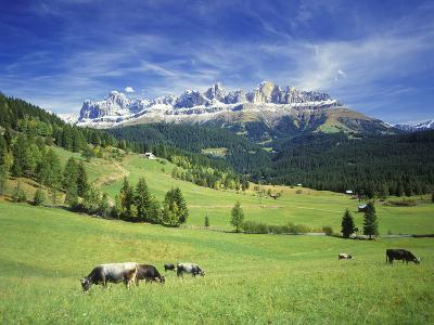 Italy, South Tyrol, Rose Garden Area, Nova Levante, Geiger Alm Rosengarten Group-Udo Siebig-Photographic Print