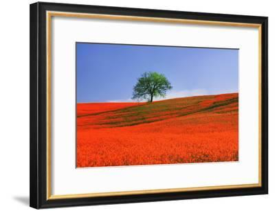 Italy, Tuscany. Abstract of oak tree on red flower-covered hillside-Jaynes Gallery-Framed Photographic Print