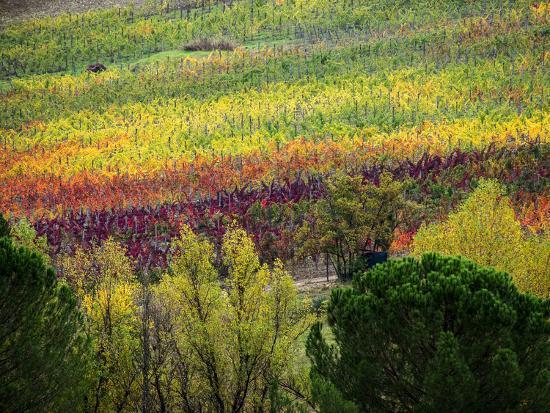 Italy, Tuscany, Chianti, Autumn Vineyard Rows Photographic Print by Terry  Eggers   Art com
