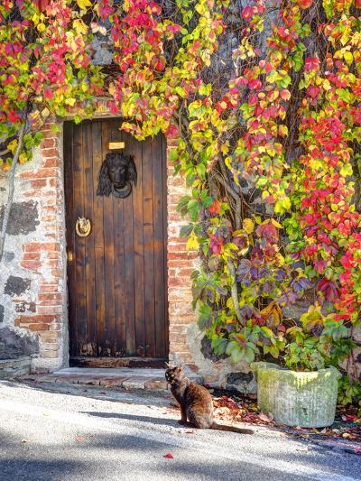 Italy, Tuscany, Contignano. a Wooden Door Surrounded by Fall and Cat-Julie Eggers-Photographic Print