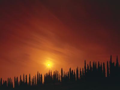 Italy, Tuscany, Cypresses, Evening Sun-Thonig-Photographic Print