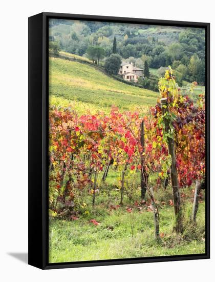 Italy, Tuscany  Farm House and Vineyard in the Chianti Region Framed Canvas  Print by Julie Eggers | Art com