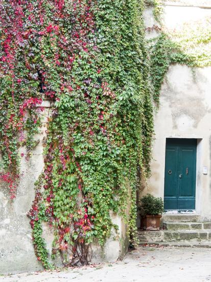 Italy, Tuscany, Monticchiello. Red Ivy Covering the Walls of Buildings-Julie Eggers-Photographic Print