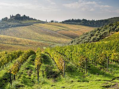 Italy, Tuscany. Rows of Vines and Olive Groves Carpet the Countryside-Julie Eggers-Photographic Print