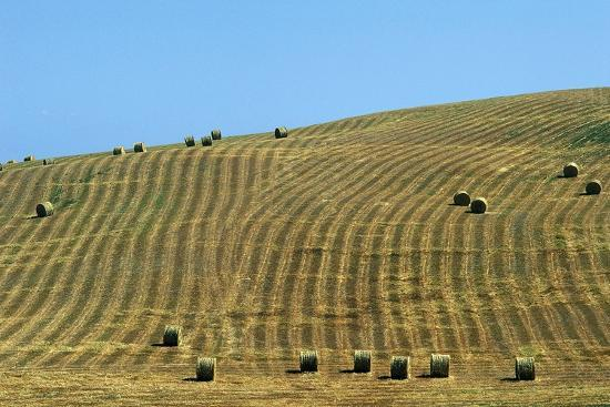 Italy, Tuscany, Val D'Orcia Natural Park, Rural Landscape--Giclee Print
