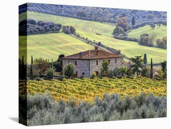 Italy, Tuscany. Vineyards and Olive Trees in Autumn by a House-Julie Eggers-Stretched Canvas Print