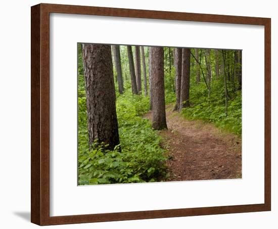 Itasca State Park, Minnesota, USA-Peter Hawkins-Framed Photographic Print