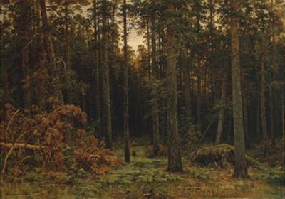 Pinewood, 1885 by Ivan Ivanovich Shishkin