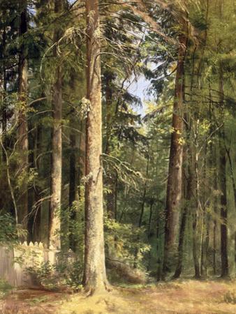 Forest, 1892 by Ivan Ivanovitch Shishkin
