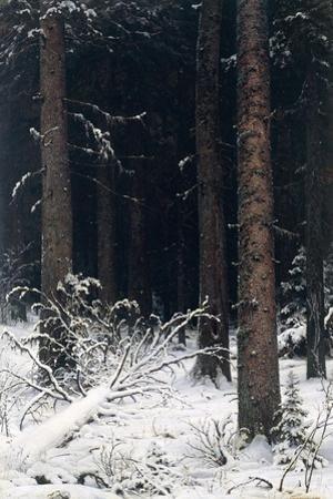 Spruce Forest in Winter, 1884 by Ivan Ivanovitch Shishkin