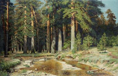The Mast-Tree Grove, Study by Ivan Ivanovitch Shishkin