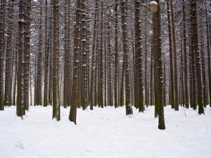 Winter Forest in Snow, Moscow, Russia by Ivan Vdovin