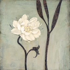 Ivory Bloom by Ivo