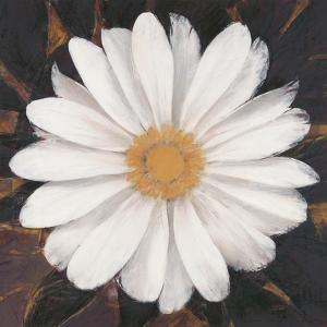 Magical White Daisy by Ivo