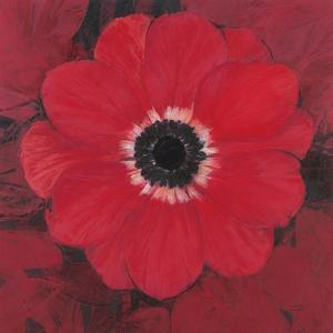 Single Red Anemone by Ivo