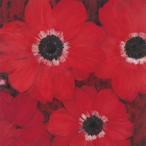 Triple Red Anemone by Ivo