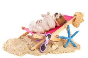 Little Cute Beach Puppy Resting In Chair by Ivonnewierink