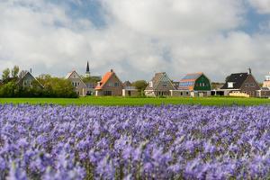 Small Village Den Hoorn with White Church at Dutch Wadden Island Texel by Ivonnewierink