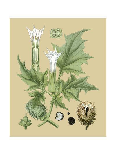 Ivory Blooms II-Vision Studio-Art Print