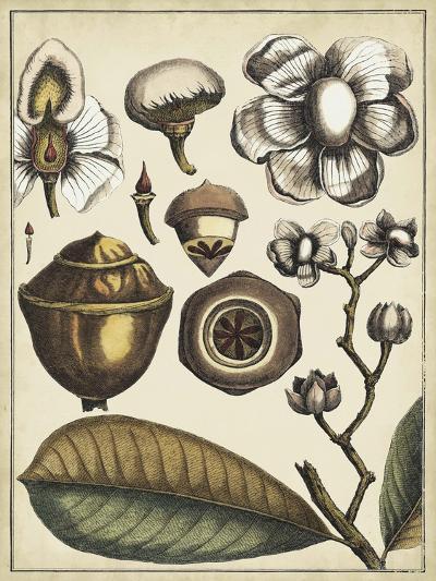 Ivory Botanical Study VI-Vision Studio-Art Print