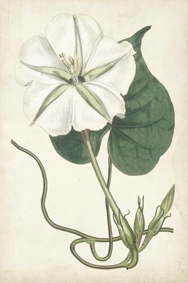 Ivory Garden III-Curtis-Art Print