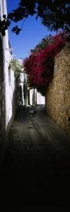 Ivy on a Stonewall in an Alley, Lindos, Rhodes, Greece