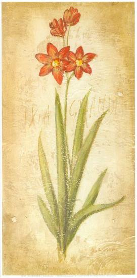 Ixia Grandiflora-Roberta Ricchini-Art Print