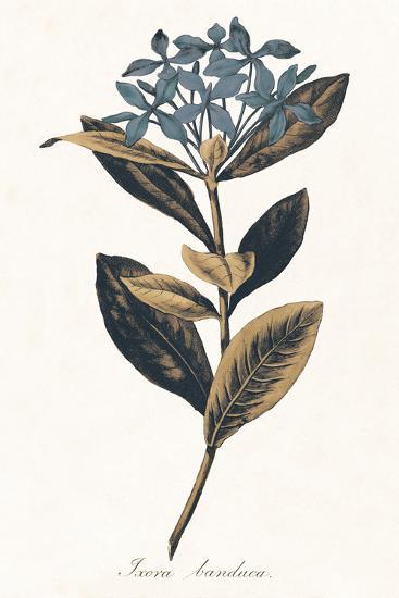 Ixora Banduca - Golden-A^ Poiteau-Giclee Print
