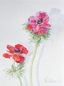 Anemone, 1998 by Izabella Godlewska de Aranda
