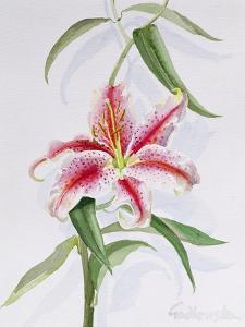 Lily, 1998 by Izabella Godlewska de Aranda