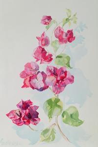 No.2 Bougainvillea Red by Izabella Godlewska de Aranda