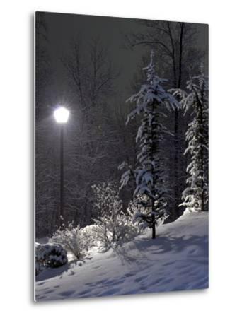 The Fir and Street Lamp