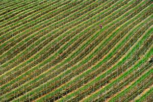 Vineyard by Izidor Gasperlin