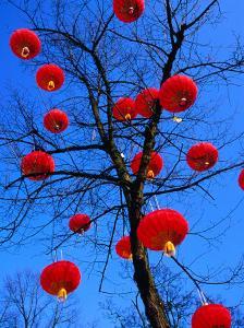Chinese Lanterns Hanging from Trees in Tivoli Gardens, Copenhagen, Denmark by Izzet Keribar