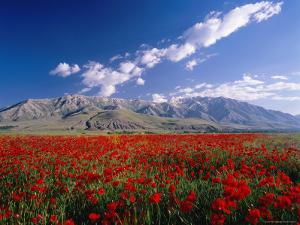 Field of Flowers, Around Lake Van by Izzet Keribar