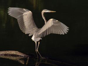 Big Bird by J.D. Mcfarlan