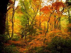 Chimneys Trail GSMNP, TN by J.D. Mcfarlan