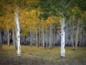 Dixie Forest, UT by J.D. Mcfarlan