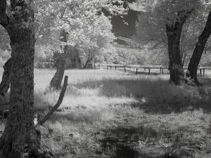 Forrest by J.D. Mcfarlan