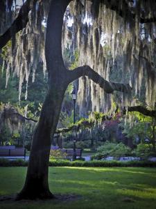 Forsyth Pk, Savannah by J.D. Mcfarlan