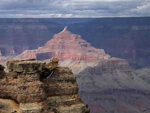 Grand Canyon III by J.D. Mcfarlan