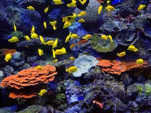 Reef Fish by J.D. Mcfarlan