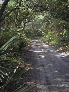 Sandy Lane by J.D. Mcfarlan