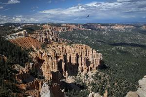 Soaring over Bryce by J.D. Mcfarlan