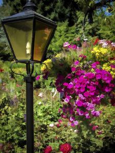 Street Lamp by J.D. Mcfarlan