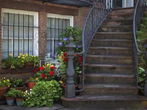 Townhouse Steps by J.D. Mcfarlan